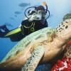 Dive Byron Bay