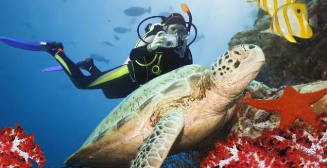 Broken head and byron bay activities - Dive byron bay ...