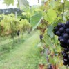 3 Top Wineries Near Byron Bay to Include on Your Next Holiday