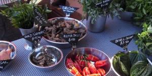 Byron Bay camping gives visitors a chance to explore the Byron Bay markets.