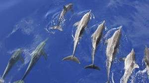 Dolphins are a fabulous feature of Byron Bay